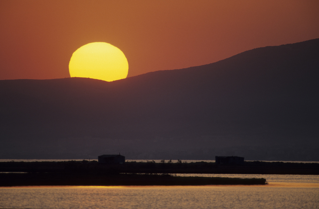 Δέλτα Έβρου - Photo (c) Andrea Bonetti / WWF Greece