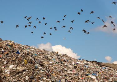 Η κατάσταση με τα σκουπίδια στην Ελλάδα (Photo: Flickr/Justin Ritchie)